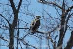 Upper Peninsula Birding
